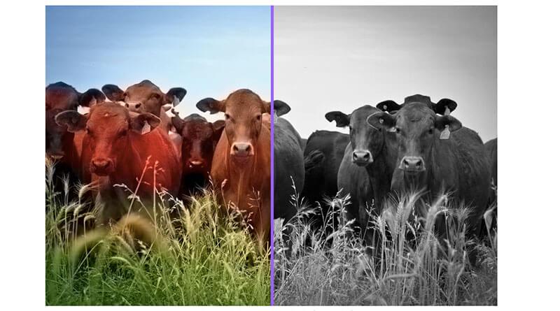 แปลงภาพขาวดำเป็นภาพสี อย่างง่ายๆด้วย Colorize Photos